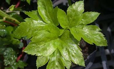 tomorrow-leaf-benefits
