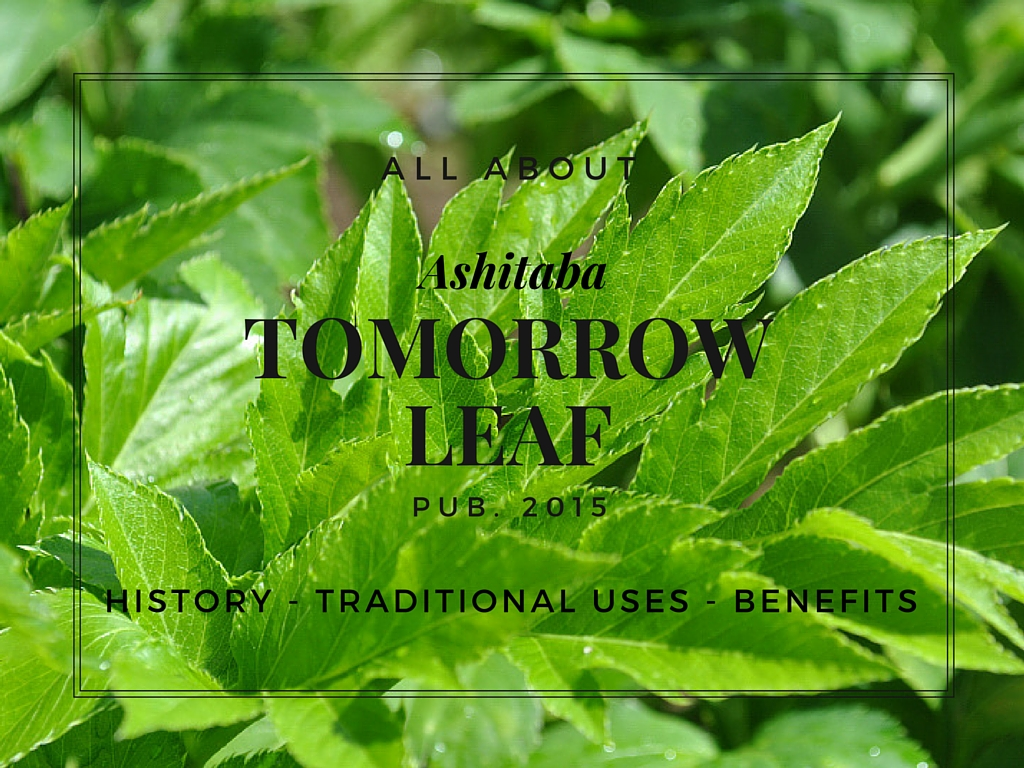 All about Ashitaba: History, Traditional Uses, Benefits