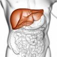 Ashitaba-Improves-Liver